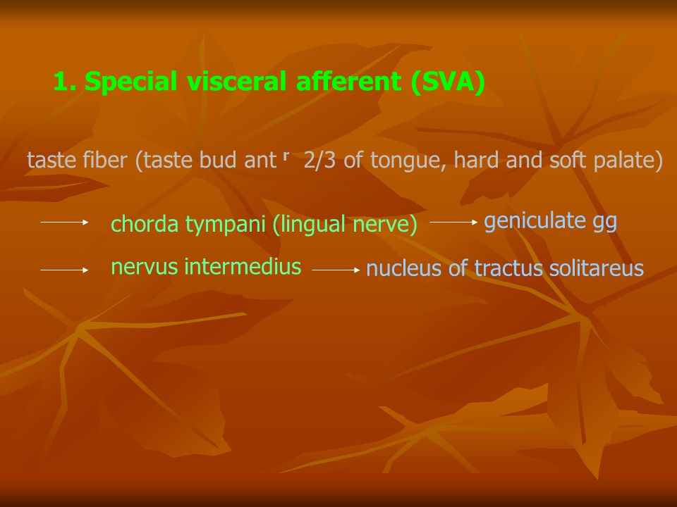 1. Special visceral afferent (SVA)
