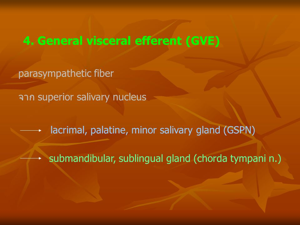 4. General visceral efferent (GVE)