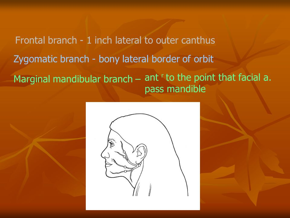 Frontal branch - 1 inch lateral to outer canthus