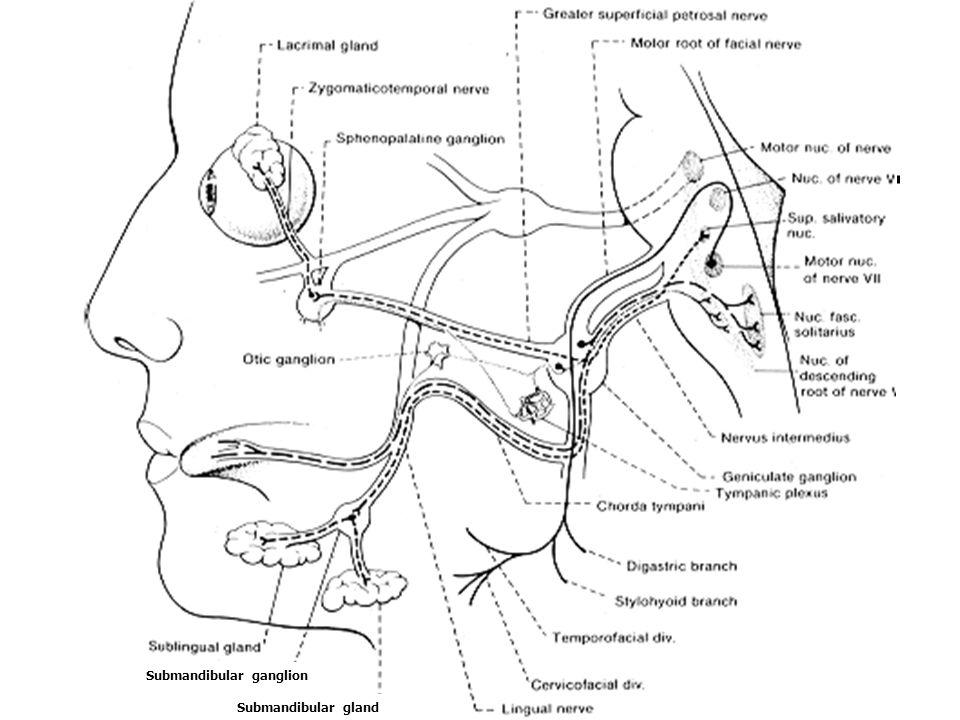 Submandibular ganglion