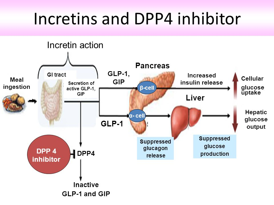Incretins and DPP4 inhibitor