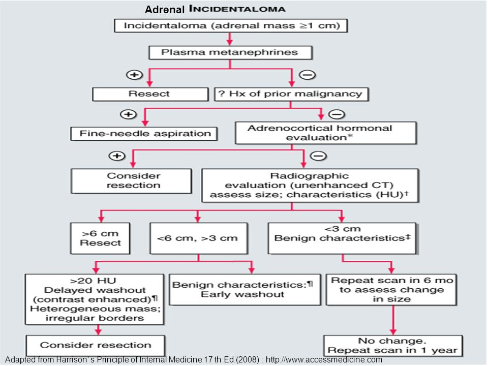 Adrenal Adapted from Harrison' s Principle of Internal Medicine 17 th Ed.(2008) : http://www.accessmedicine.com.