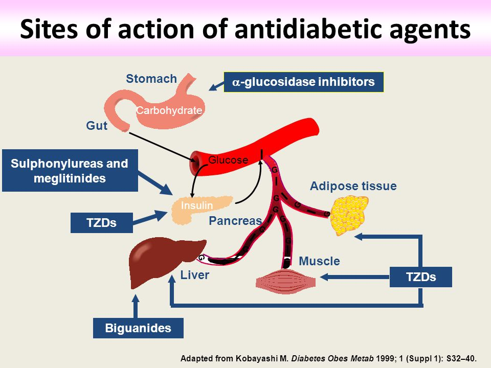 Sites of action of antidiabetic agents