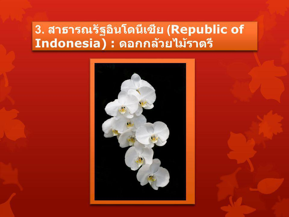 3. สาธารณรัฐอินโดนีเซีย (Republic of Indonesia) : ดอกกล้วยไม้ราตรี
