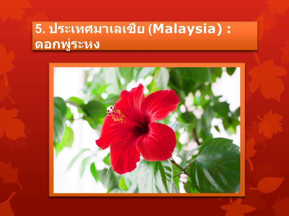 5. ประเทศมาเลเซีย (Malaysia) : ดอกพู่ระหง