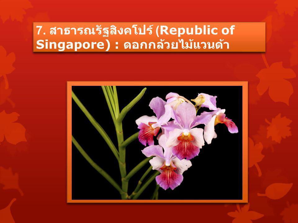 7. สาธารณรัฐสิงคโปร์ (Republic of Singapore) : ดอกกล้วยไม้แวนด้า
