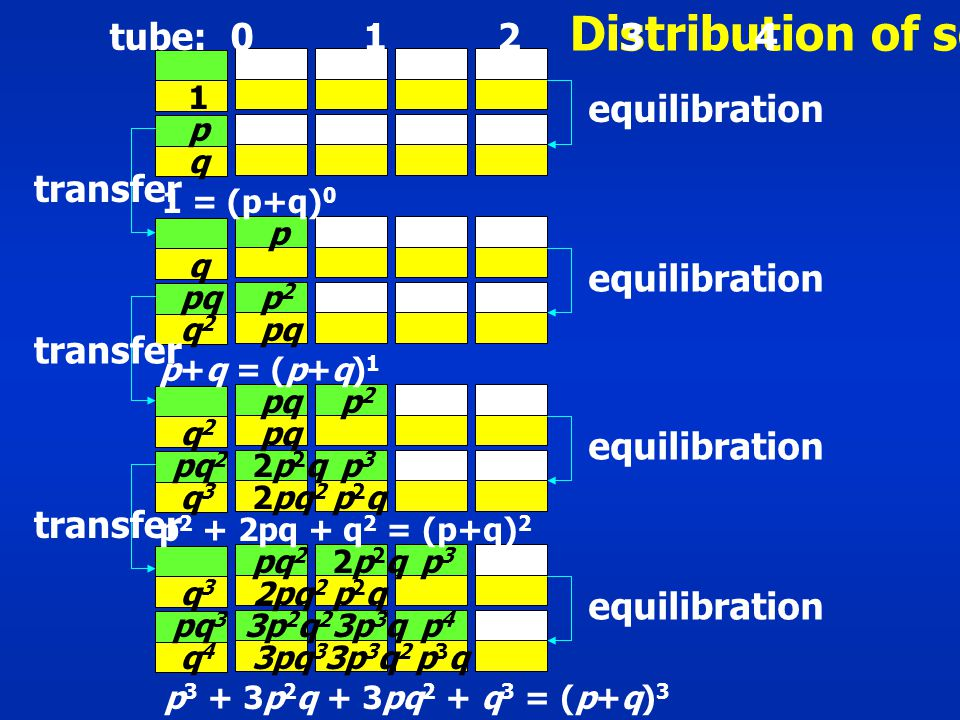 Distribution of solute