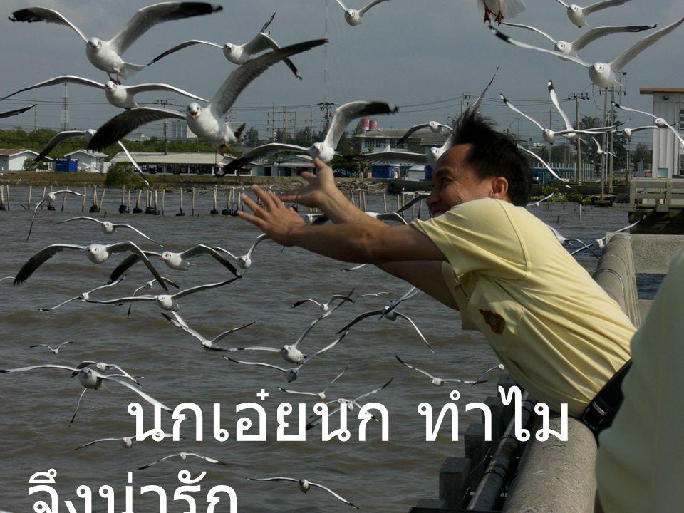 นกเอ๋ยนก ทำไม จึงน่ารัก