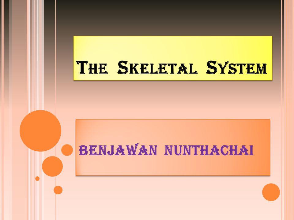 The Skeletal System BENJAWAN NUNTHACHAI