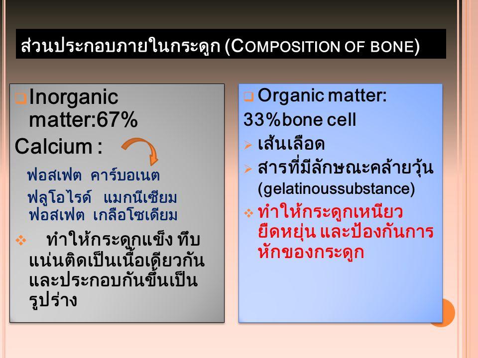 ส่วนประกอบภายในกระดูก (Composition of bone)
