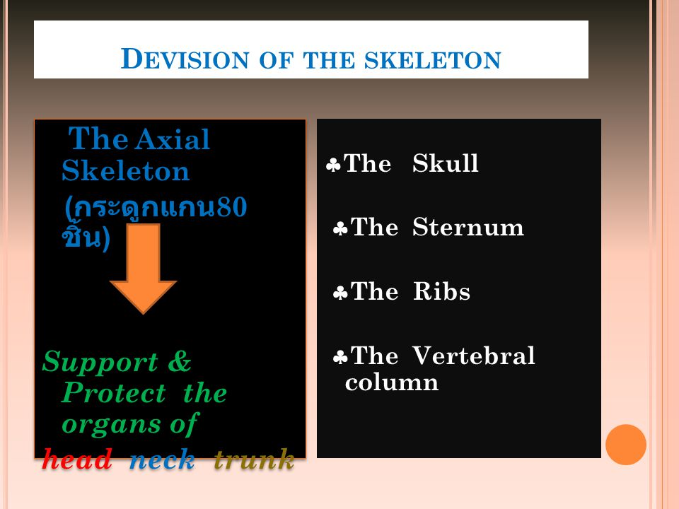 Devision of the skeleton