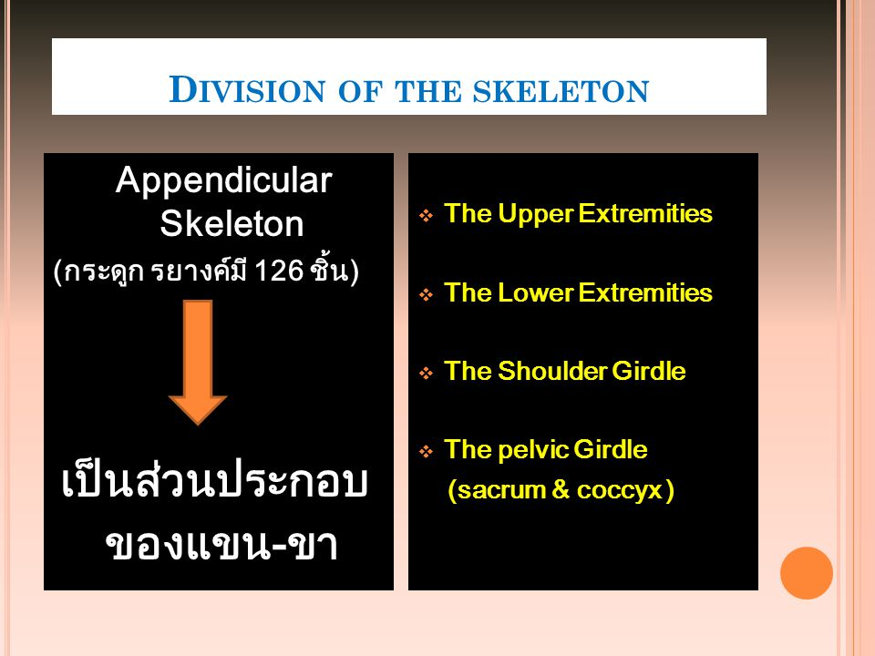 Division of the skeleton