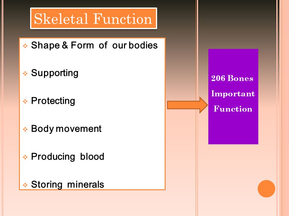 Skeletal Function Shape & Form of our bodies Supporting Protecting
