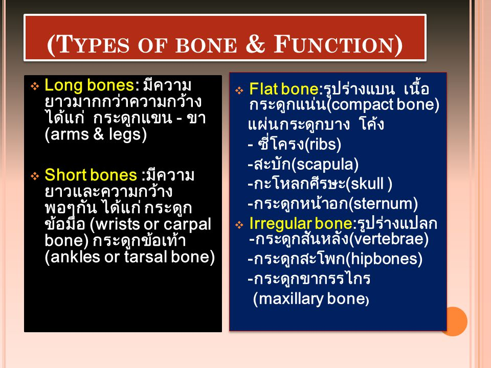 (Types of bone & Function)