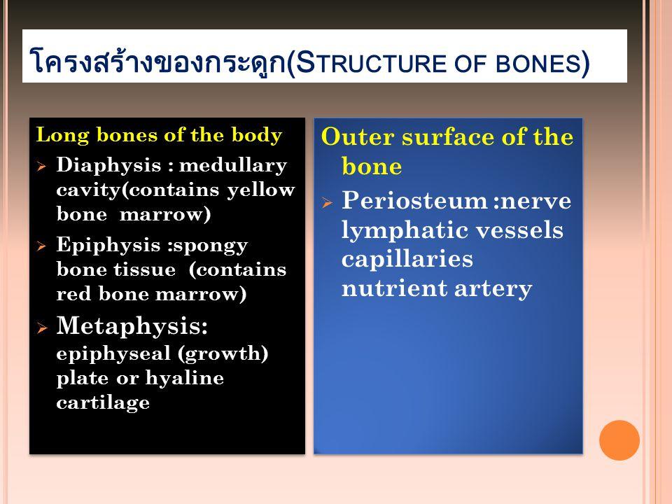 โครงสร้างของกระดูก(Structure of bones)