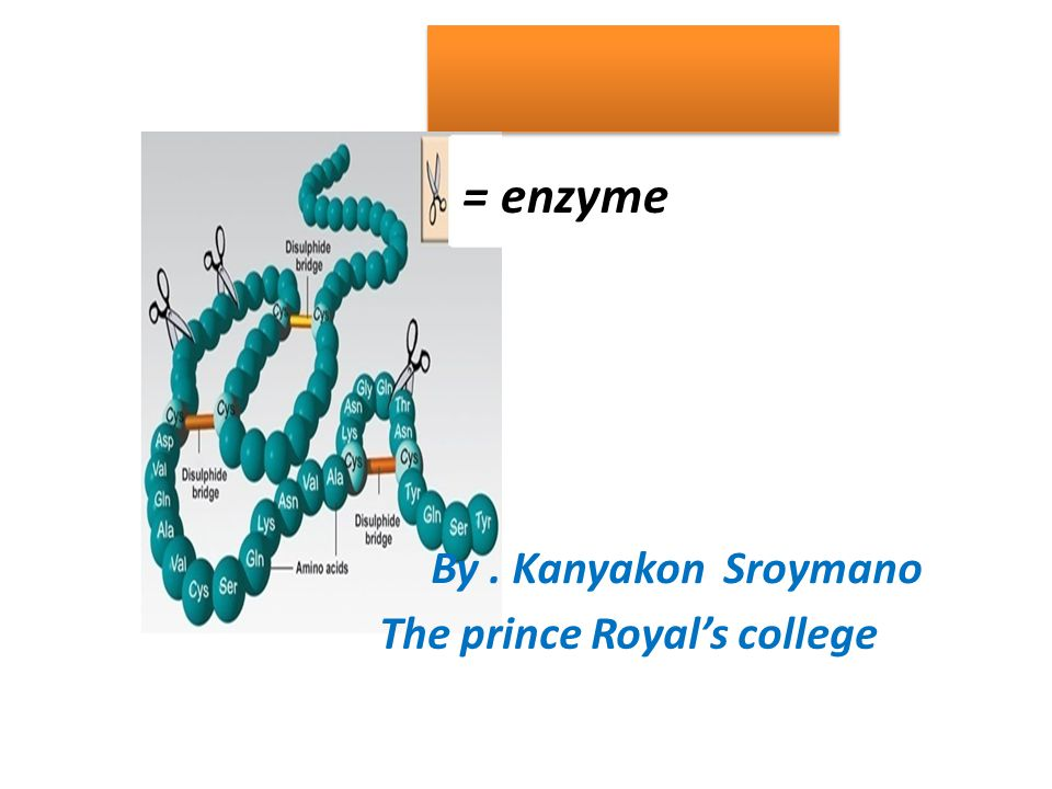 = enzyme By . Kanyakon Sroymano The prince Royal's college