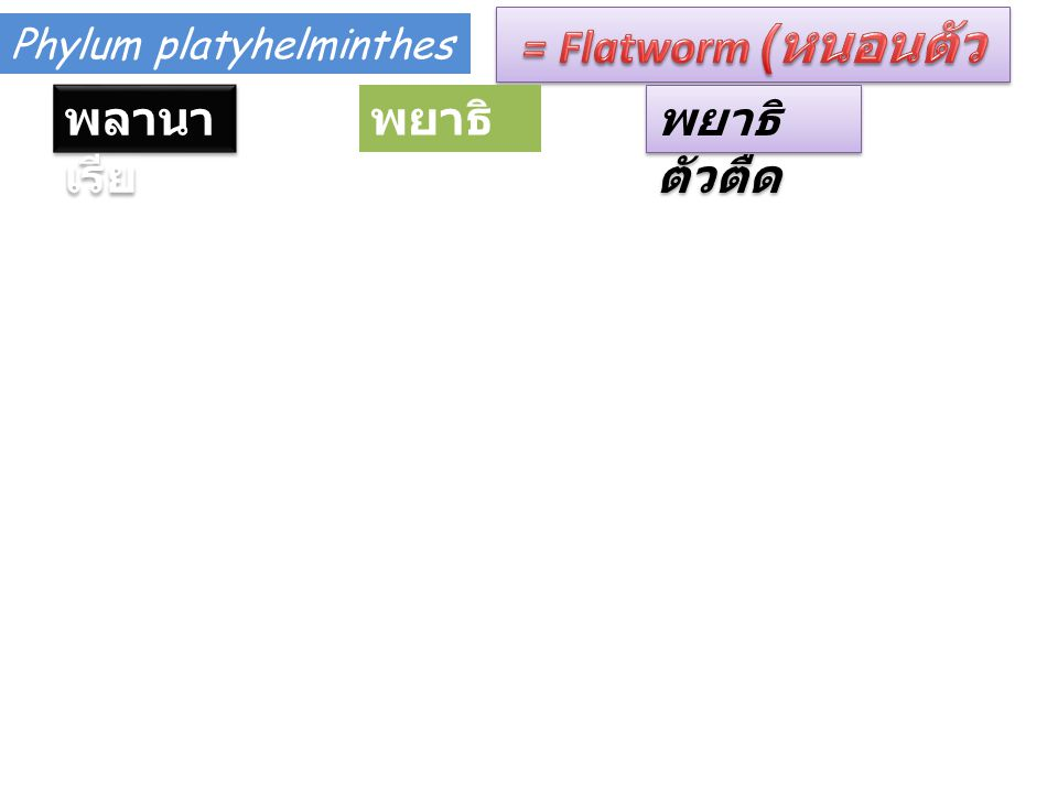 = Flatworm (หนอนตัวแบน)