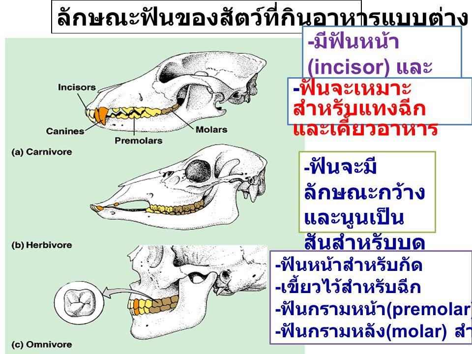 ลักษณะฟันของสัตว์ที่กินอาหารแบบต่าง ๆ