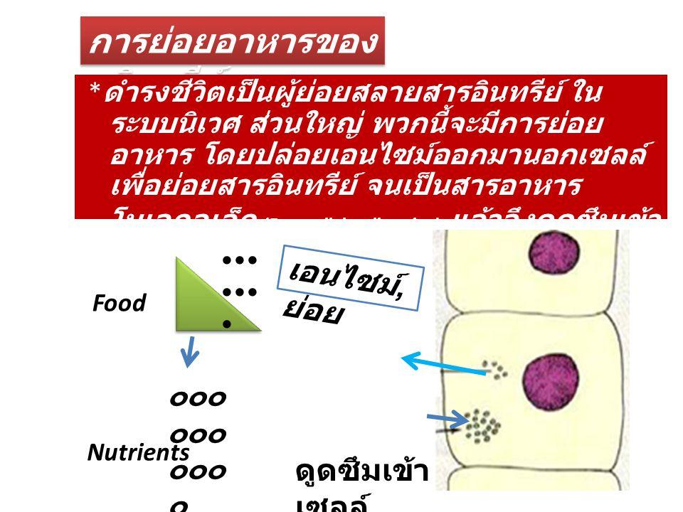 การย่อยอาหารของจุลินทรีย์