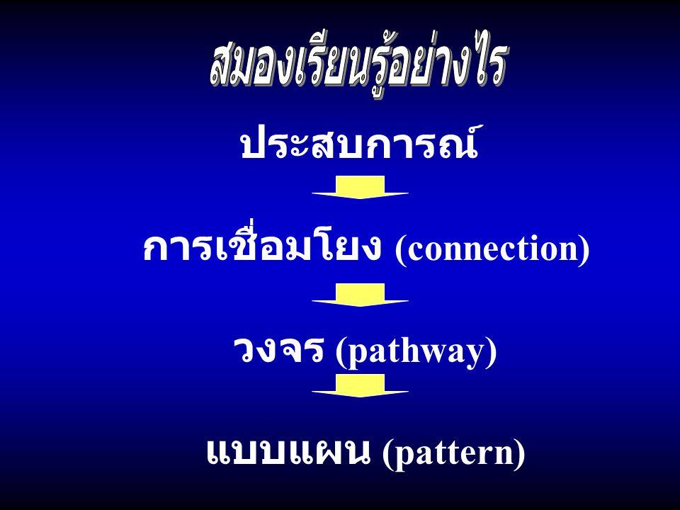 การเชื่อมโยง (connection)