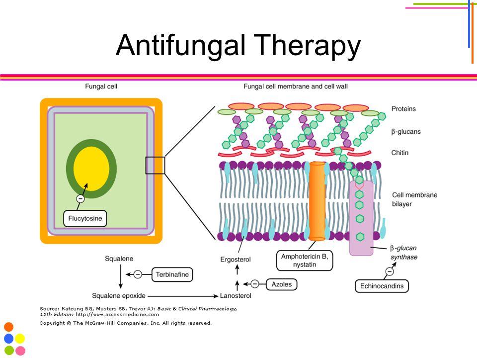 Antifungal Therapy