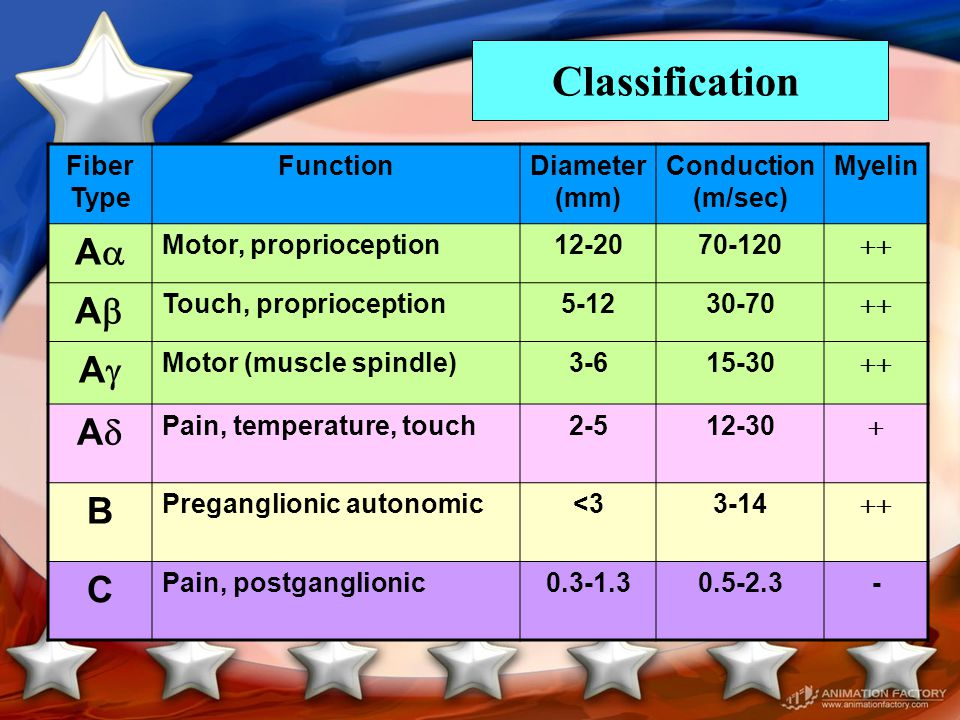Classification A A A A B C Fiber Type Function Diameter (mm)