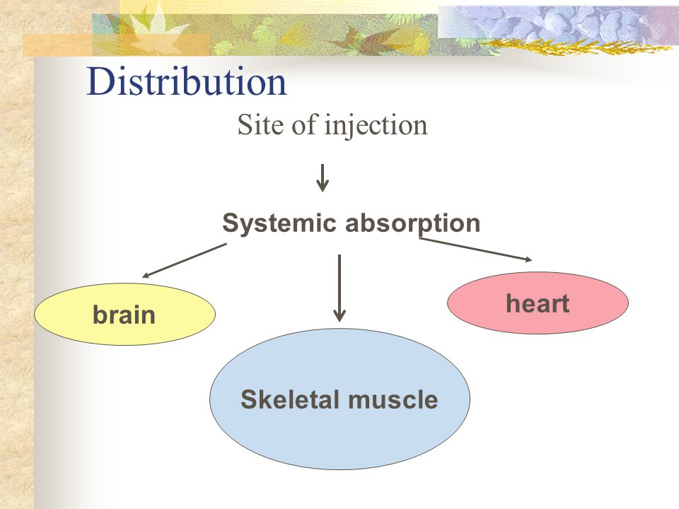 Distribution Site of injection Systemic absorption heart brain