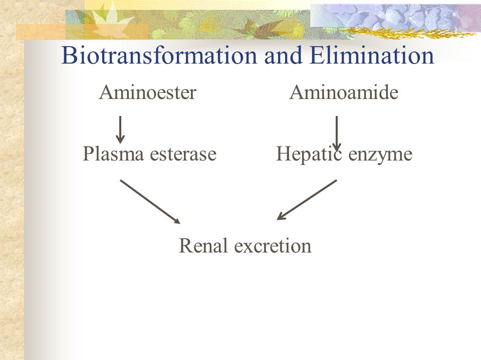 Biotransformation and Elimination