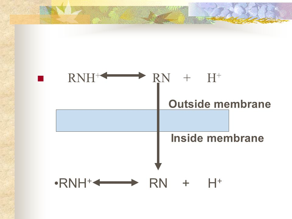 RNH+ RN + H+ Outside membrane.