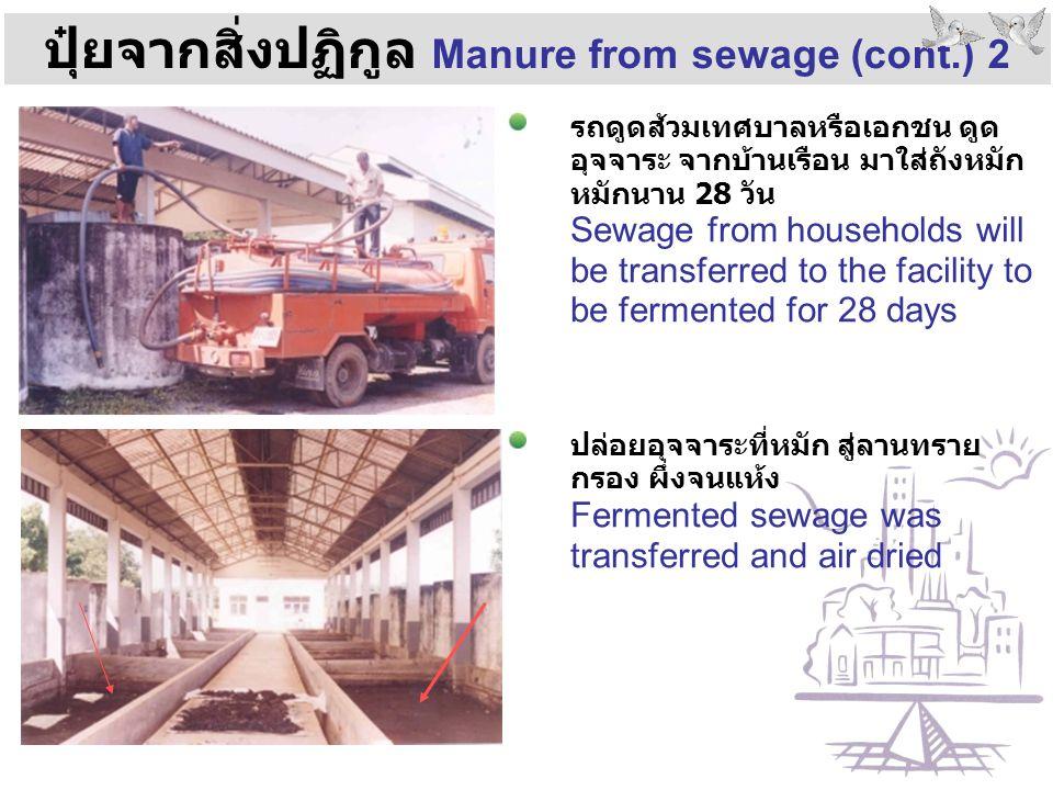 ปุ๋ยจากสิ่งปฏิกูล Manure from sewage (cont.) 2