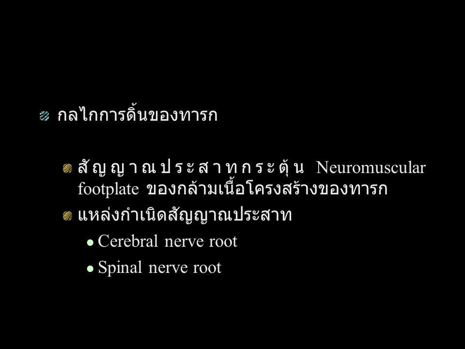 กลไกการดิ้นของทารก สัญญาณประสาทกระตุ้น Neuromuscular footplate ของกล้ามเนื้อโครงสร้างของทารก. แหล่งกำเนิดสัญญาณประสาท.