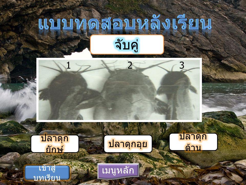 แบบทดสอบหลังเรียน จับคู่ 1 2 3 ปลาดุกด้าน ปลาดุกยักษ์ ปลาดุกอุย