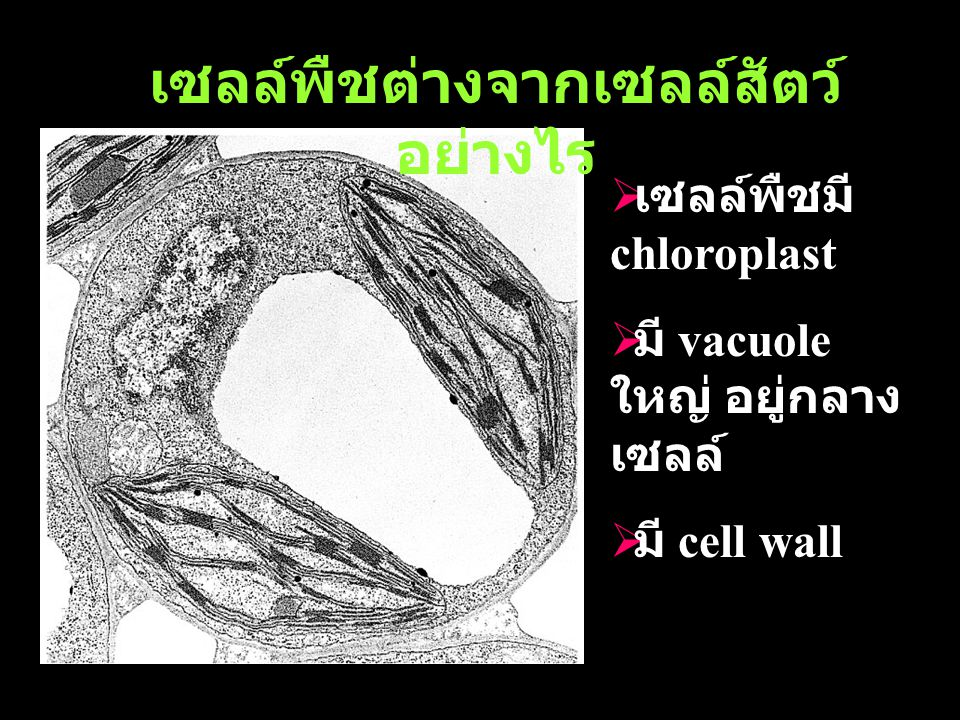 เซลล์พืชต่างจากเซลล์สัตว์อย่างไร
