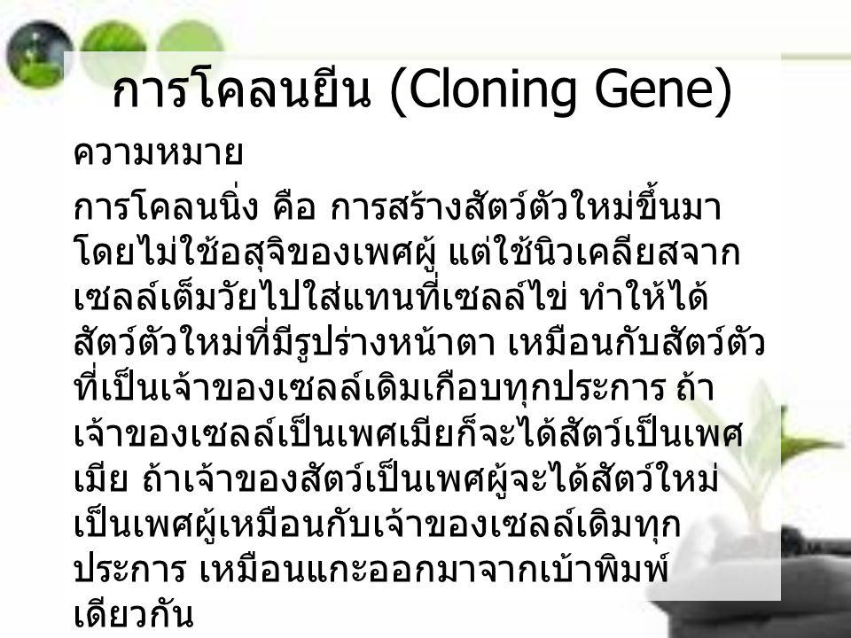 การโคลนยีน (Cloning Gene)