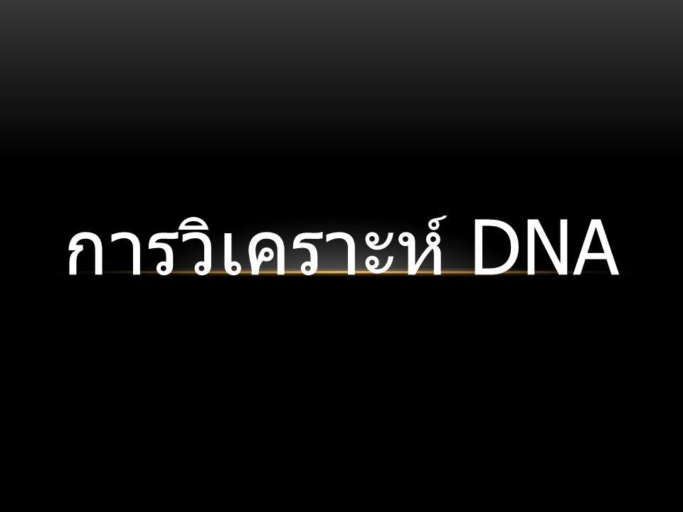 การวิเคราะห์ DNA