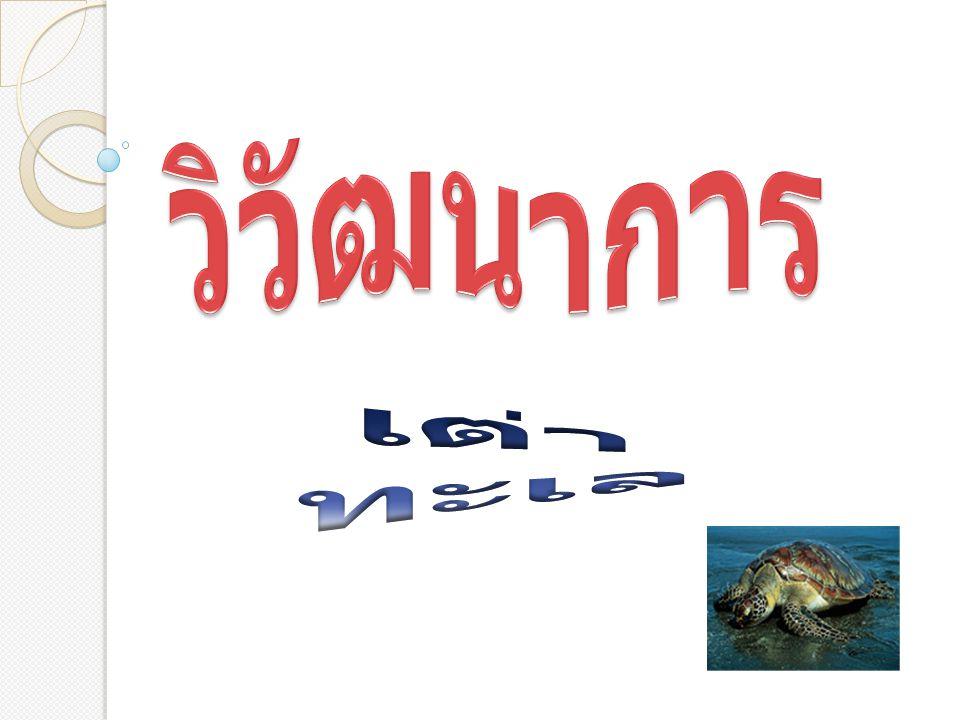 วิวัฒนาการ เต่าทะเล