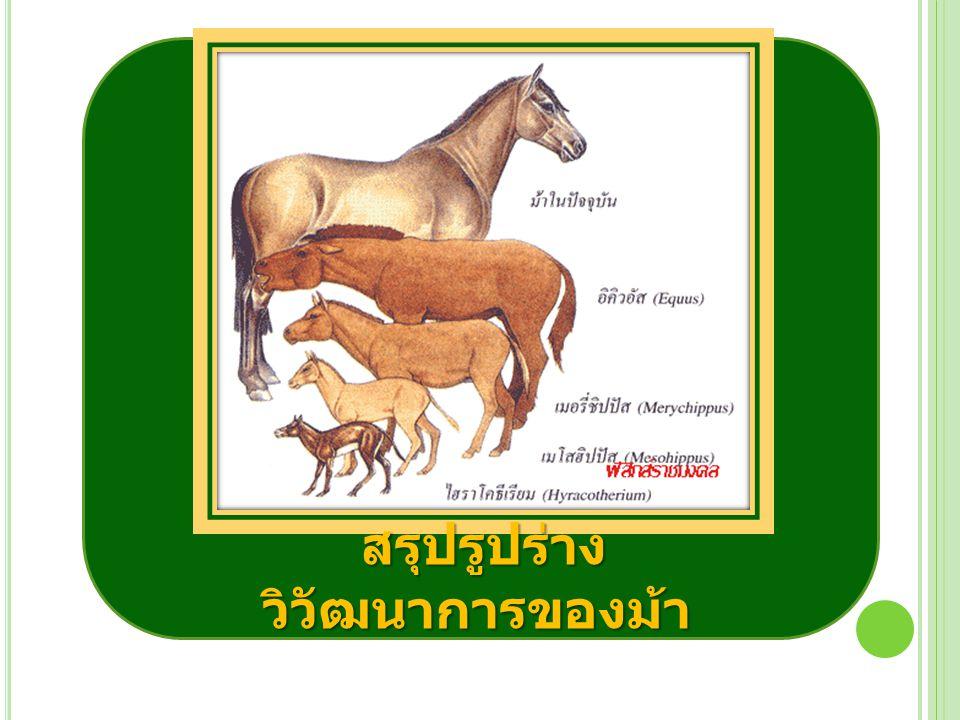 สรุปรูปร่างวิวัฒนาการของม้า