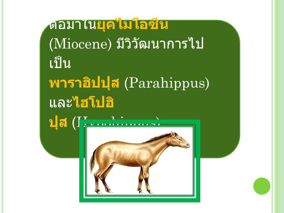 ต่อมาในยุคไมโอซีน (Miocene) มีวิวัฒนาการไปเป็น