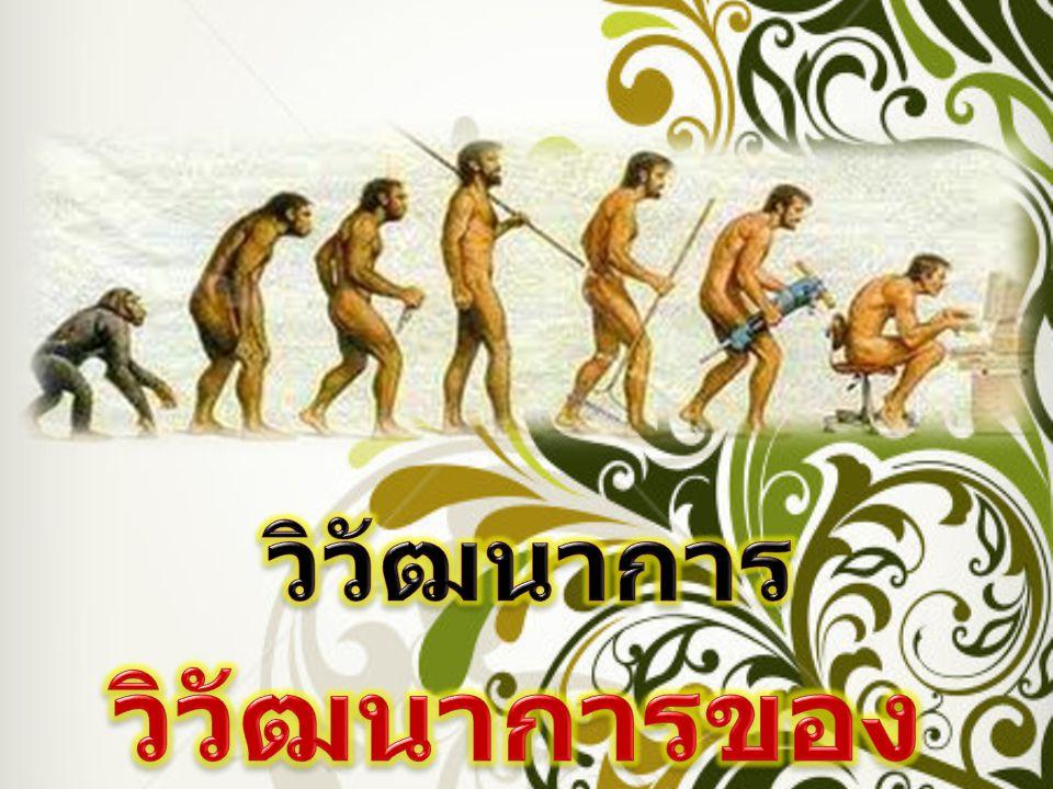 วิวัฒนาการ วิวัฒนาการของมนุษย์...