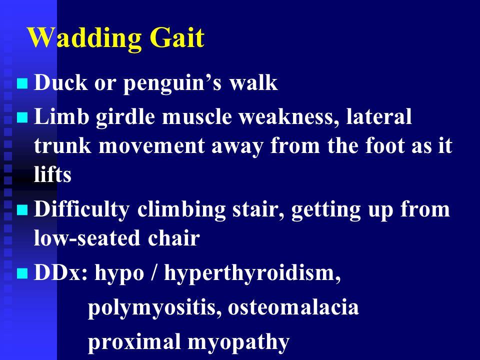 Wadding Gait Duck or penguin's walk