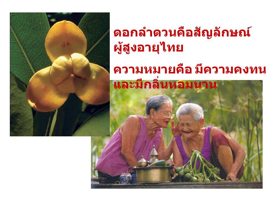 ดอกลำดวนคือสัญลักษณ์ผู้สูงอายุไทย