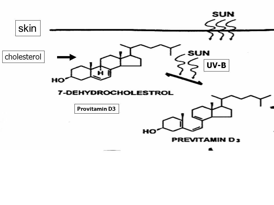 skin cholesterol UV-B Provitamin D3