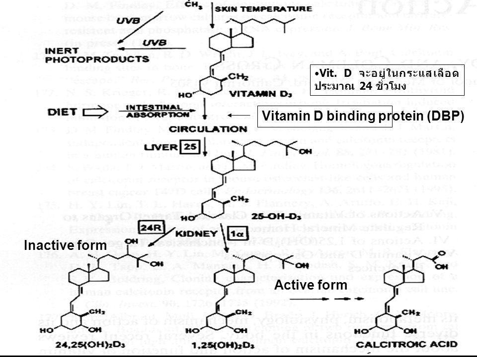 Vitamin D binding protein (DBP)