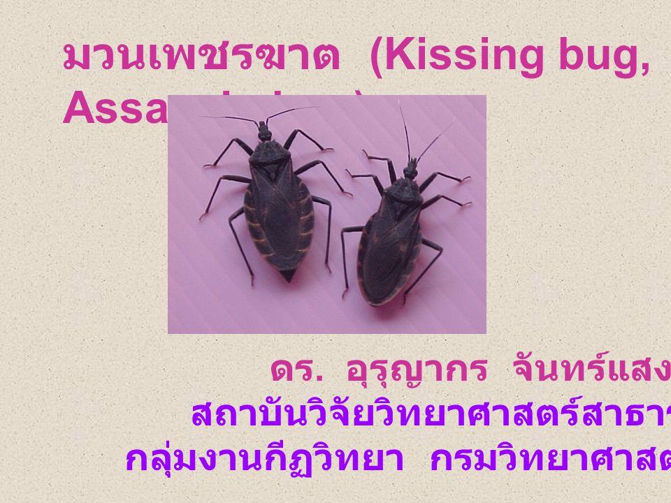 มวนเพชรฆาต (Kissing bug, Assassin bug)