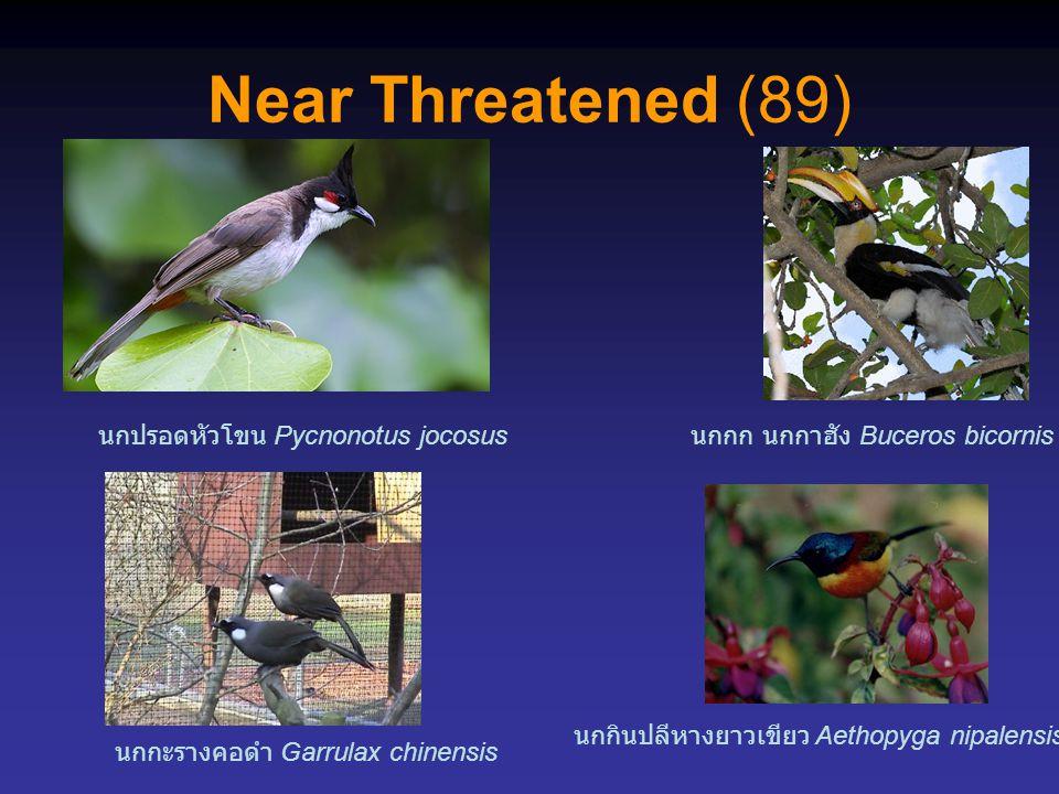 Near Threatened (89) นกปรอดหัวโขน Pycnonotus jocosus