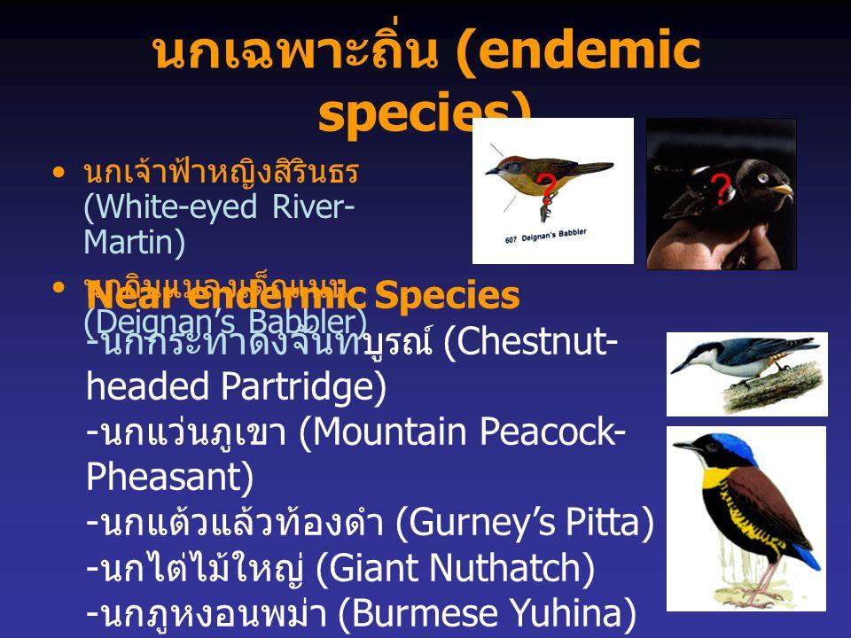 นกเฉพาะถิ่น (endemic species)