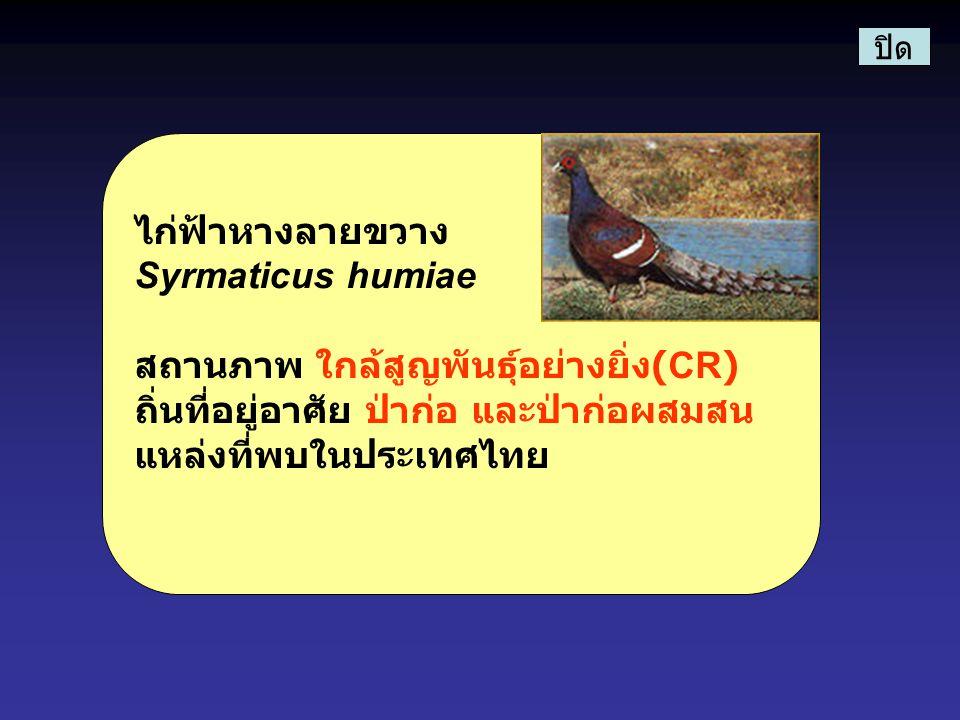 สถานภาพ ใกล้สูญพันธุ์อย่างยิ่ง(CR)