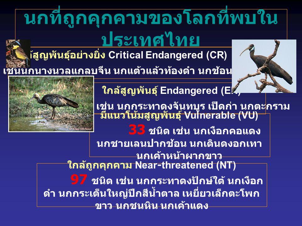 นกที่ถูกคุกคามของโลกที่พบในประเทศไทย