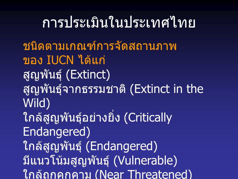 การประเมินในประเทศไทย