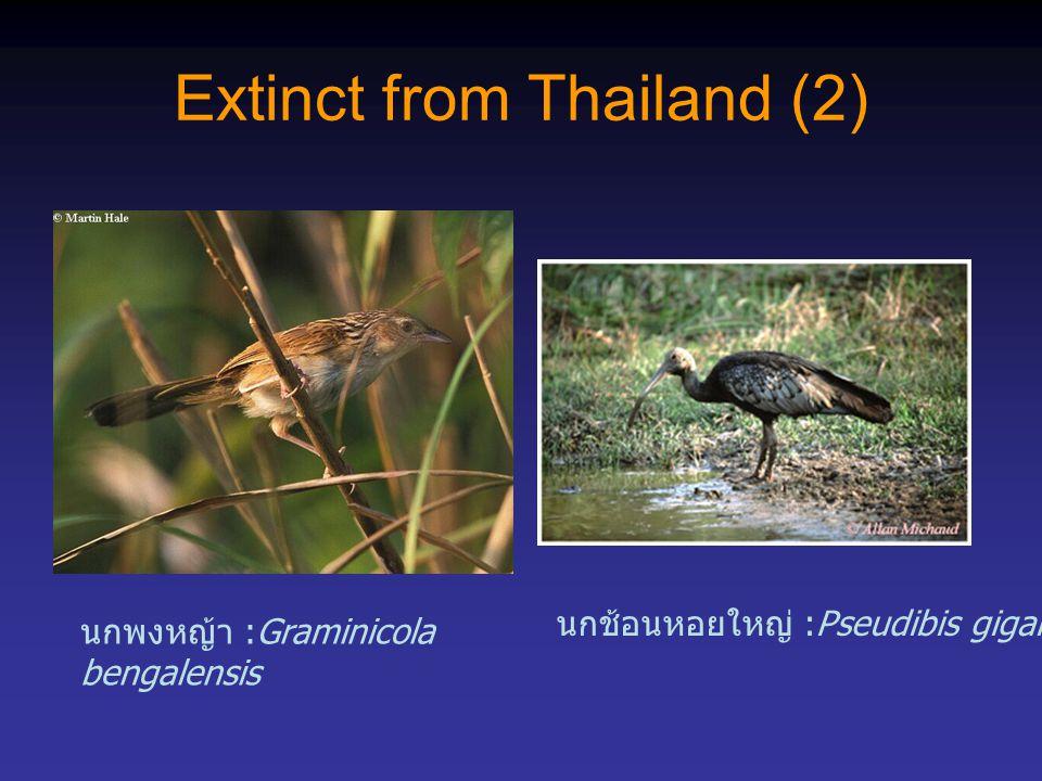 Extinct from Thailand (2)